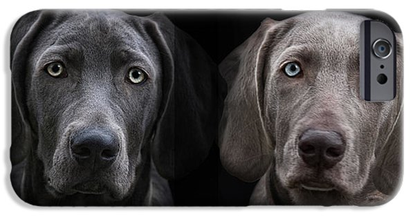 Weimaraners iPhone Cases - Brother And Sister iPhone Case by Joachim G Pinkawa