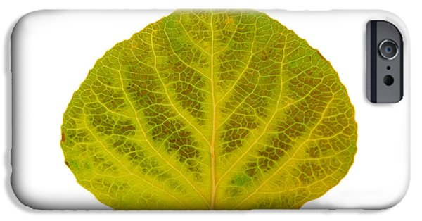 Fall Glass iPhone Cases - Brown and Green Aspen Leaf 2 iPhone Case by Agustin Goba