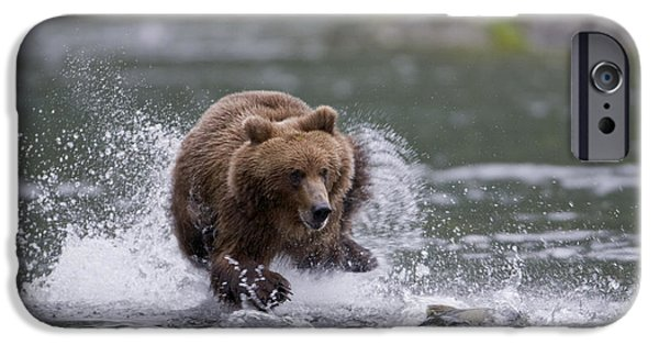 Prince William iPhone Cases - Brown Bear Chases Salmon In A Shallow iPhone Case by Milo Burcham