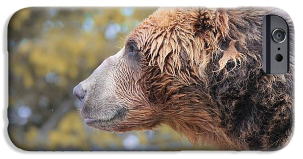 Kodiak iPhone Cases - Brown Bear Smile iPhone Case by Dan Sproul