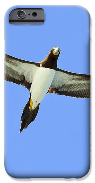 Brown Booby iPhone Case by Tony Beck