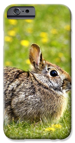 Brown Bunny in Green Grass iPhone Case by Christina Rollo