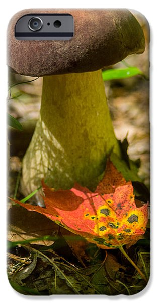 Agaricales iPhone Cases - Brown Capped Poria iPhone Case by Douglas Barnett