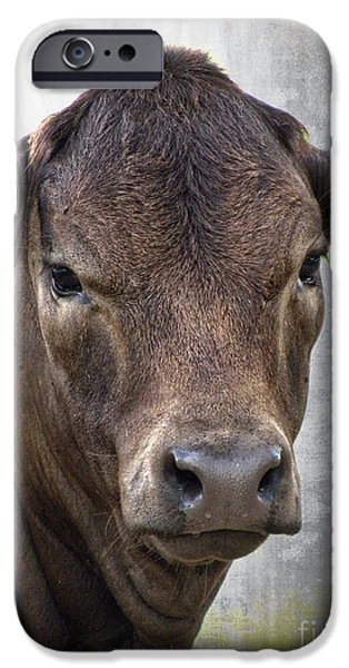 Brown Eyed Boy - Calf Portrait iPhone Case by Ella Kaye Dickey