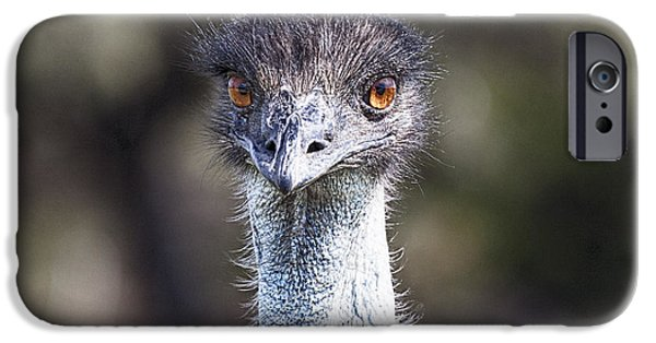 Emu iPhone Cases - Brown-Eyed Girl V2 iPhone Case by Douglas Barnard