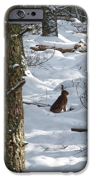 Brown Hare - Snow Wood iPhone Case by Phil Banks