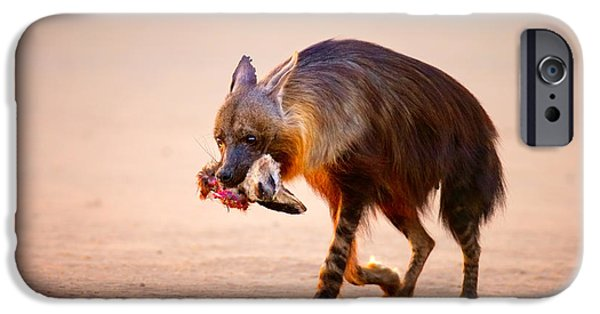 Ears iPhone Cases - Brown hyena with bat-eared fox in jaws iPhone Case by Johan Swanepoel