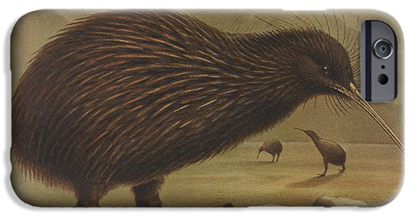 Kiwi iPhone Cases - Brown Kiwi iPhone Case by J G Keulemans