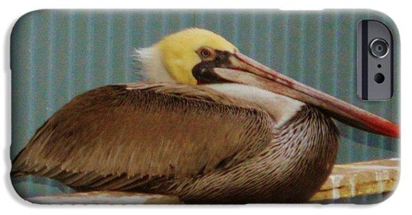 Sea Birds Digital Art iPhone Cases - Brown Pelican iPhone Case by Barbara Snyder