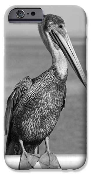 Cedar Key iPhone Cases - Brown Pelican iPhone Case by Christian Heeb