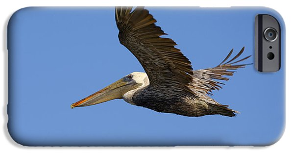 Pelicans iPhone Cases - Brown Pelican Flight iPhone Case by Mike  Dawson