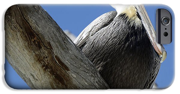 Birdseye iPhone Cases - Brown Pelican in Thought iPhone Case by Bruce Gourley