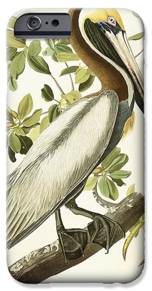 Color Drawings iPhone Cases - Brown Pelican iPhone Case by John James Audubon