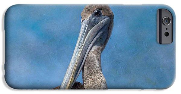 Sea Birds iPhone Cases - Brown Pelican iPhone Case by Kim Hojnacki