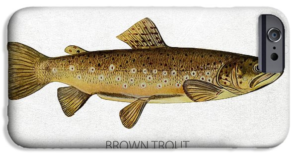Fresh Water Fish iPhone Cases - Brown Trout iPhone Case by Aged Pixel