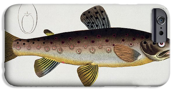 Wild Trout iPhone Cases - Brown Trout iPhone Case by Andreas Ludwig Kruger