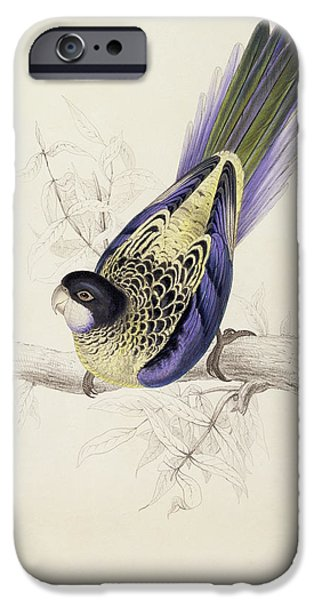 Parakeet iPhone Cases - Browns Parakeet iPhone Case by Edward Lear