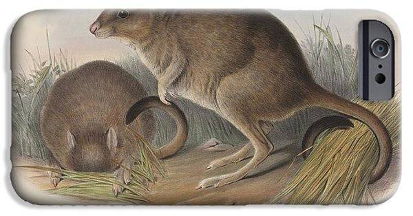 Nineteenth iPhone Cases - Brush-tailed Bettongs, Artwork iPhone Case by Natural History Museum, London