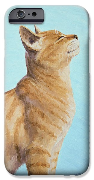 Orange Tabby iPhone Cases - Brushing the Cat iPhone Case by Crista Forest