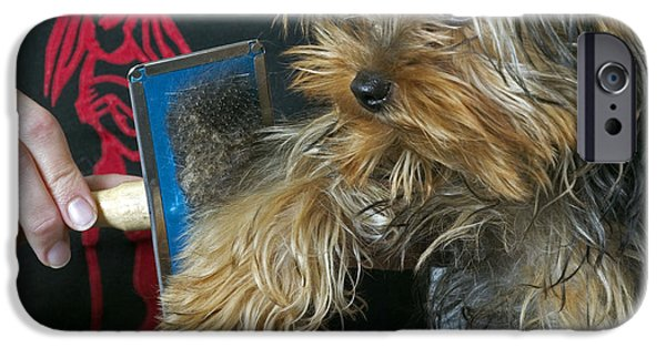 Pet Care iPhone Cases - Brushing Yorkshire Terrier iPhone Case by Jean-Michel Labat