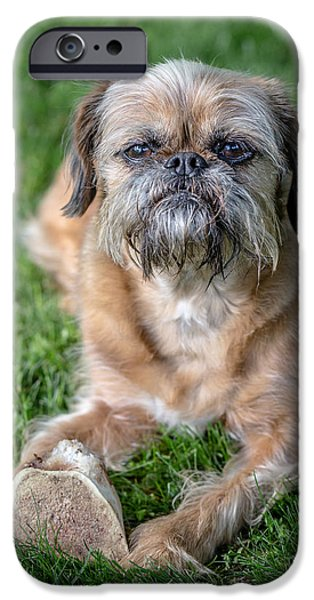 Breeder iPhone Cases - Brussels Griffon iPhone Case by Edward Fielding