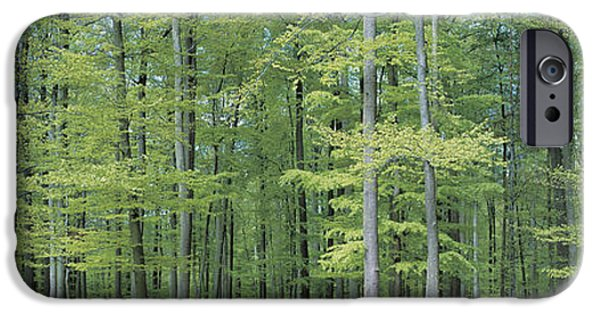 Forest Floor iPhone Cases - Bruxelles Belgium iPhone Case by Panoramic Images