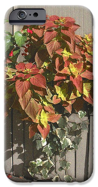 Bryant Park in September 3 iPhone Case by Muriel Levison Goodwin