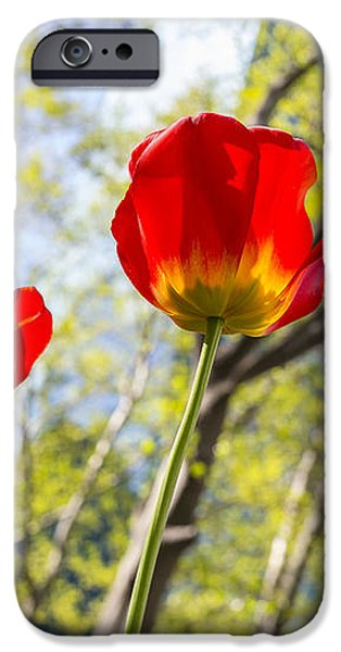 Bryant Park Tulips New York  iPhone Case by Angela A Stanton