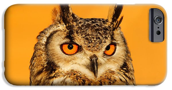 Orange iPhone Cases - Bubo Bubo iPhone Case by Roeselien Raimond