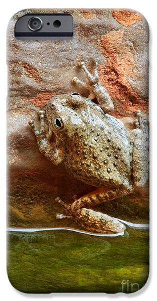 Grand Canyon iPhone Cases - Buck Farm Frog iPhone Case by Inge Johnsson