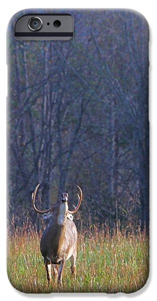 Grunts iPhone Cases - Buck In The Rut iPhone Case by Dan Sproul
