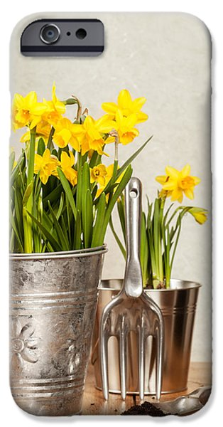 Buckets Of Daffodils iPhone Case by Amanda And Christopher Elwell