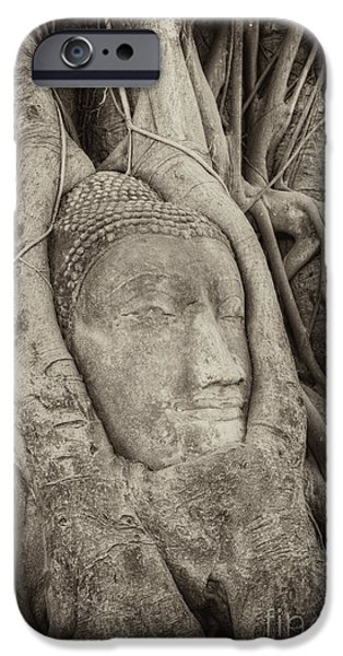 Best Sellers -  - Statue Portrait iPhone Cases - Buddha Head in Tree iPhone Case by Fototrav Print
