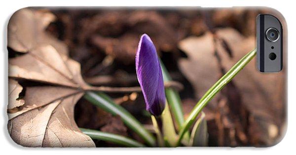 Flora iPhone Cases - Budding Crocus Flower iPhone Case by Robert Carr