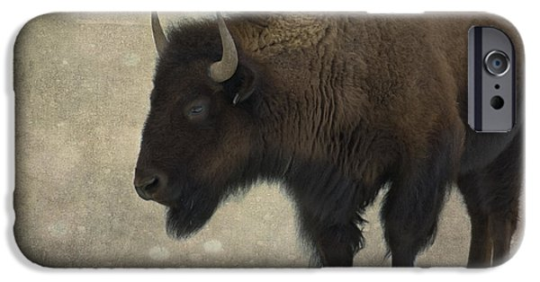 American Bison iPhone Cases - Buffalo iPhone Case by Juli Scalzi