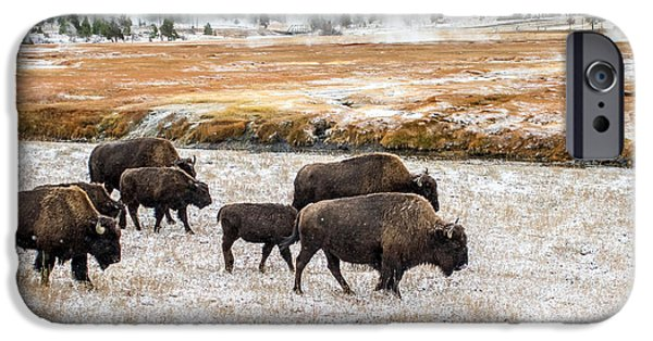 Out Of This World iPhone Cases - Buffalo in Yellowstone iPhone Case by Pierre Leclerc Photography