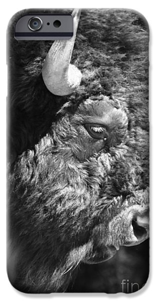 Buffalo Portrait iPhone Case by Robert Frederick