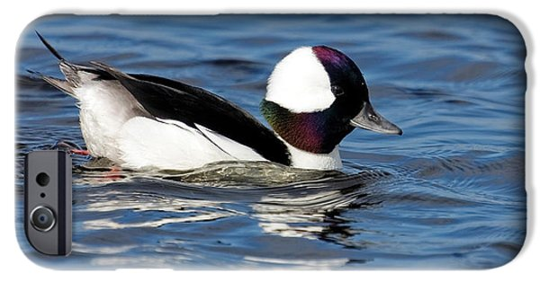 One iPhone Cases - Bufflehead iPhone Case by Dawn Currie