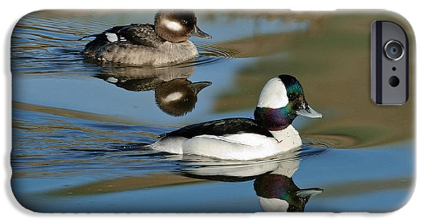 Recently Sold -  - Fauna iPhone Cases - Bufflehead Male & Female iPhone Case by Anthony Mercieca
