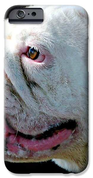 Bull iPhone Case by Diana Angstadt