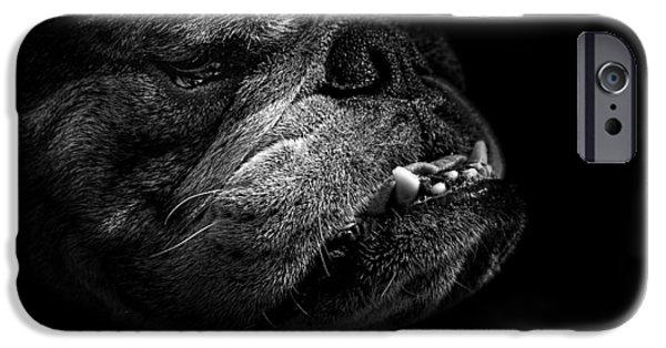 Black Dog Photographs iPhone Cases - Bull Dog iPhone Case by Bob Orsillo
