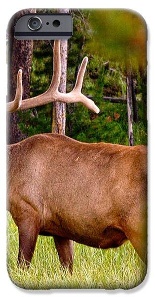 Bull Elk iPhone Case by Bill Gallagher