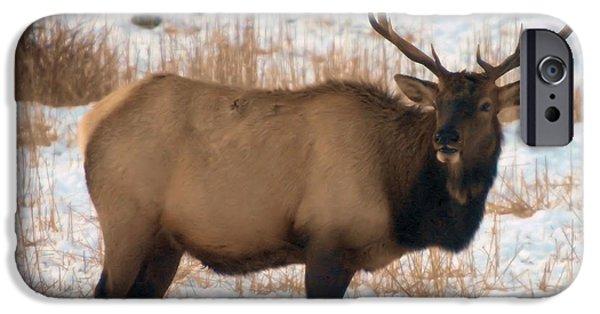 Oak Creek iPhone Cases - Bull Elk  iPhone Case by Jeff  Swan