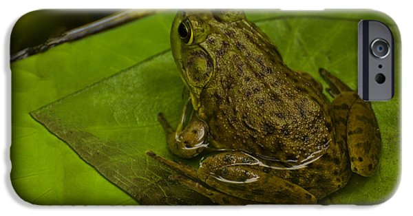 Lilly Pads iPhone Cases - bull frog on a Lilly pad iPhone Case by Chris Flees