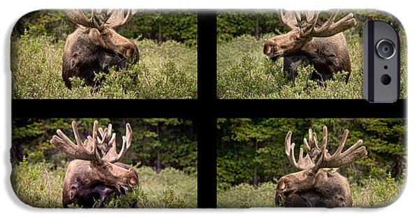 Bull Moose iPhone Cases - Bull Moose Collage iPhone Case by James BO  Insogna