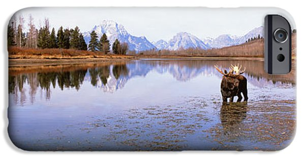 Bull Moose iPhone Cases - Bull Moose Grand Teton National Park Wy iPhone Case by Panoramic Images