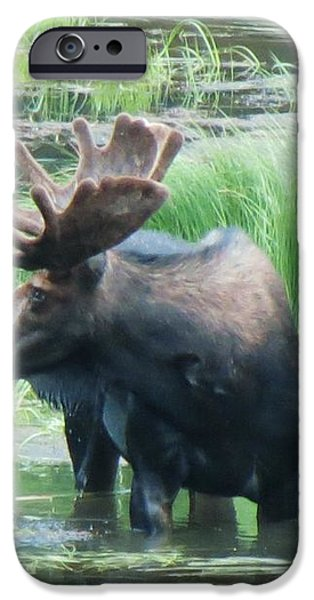Bull Moose in the Wild iPhone Case by Feva  Fotos