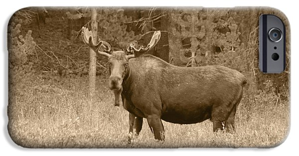 Bull Moose iPhone Cases - Bull Moose iPhone Case by Shane Bechler