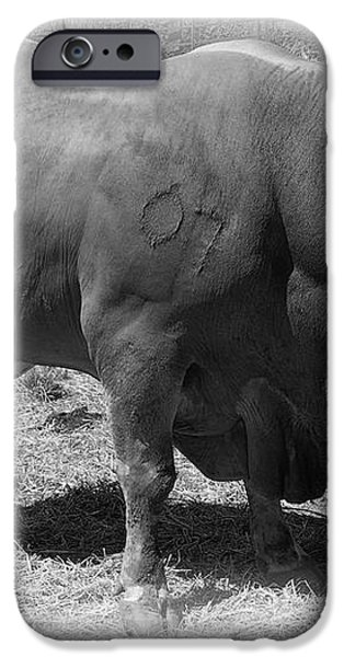 BULL NUMBER 07 iPhone Case by Daniel Hagerman