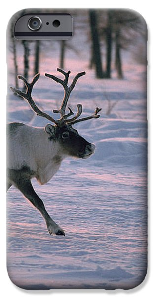 Bull Reindeer in  Siberia iPhone Case by Bryan and Cherry Alexander